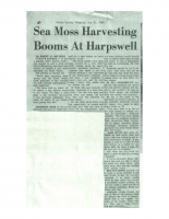 Sea Moss Harvesting Booms at Harpswell